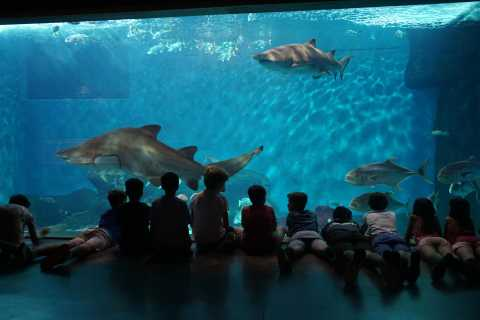 Toegangsticket Sevilla aquarium