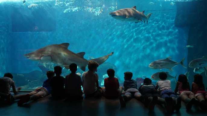 Seville Aquarium Admission Ticket