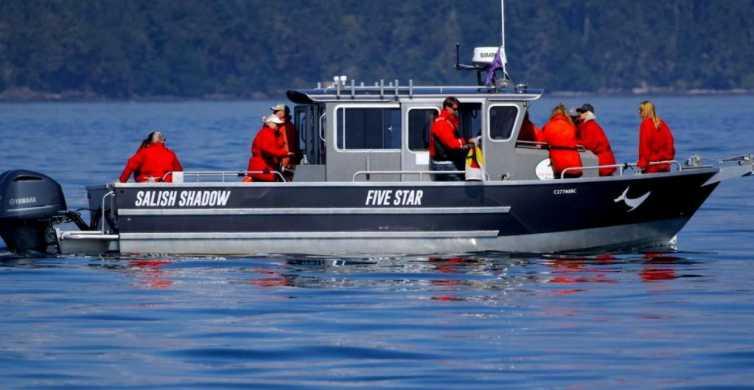 Victoria, BC: 3-Hour Ultimate Whale & Marine Wildlife Tour