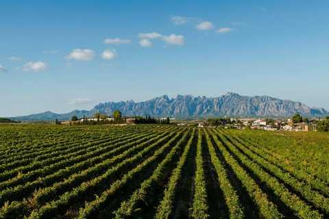 Montserrat & Cava Wineries Day Trip from Barcelona w/ Pickup