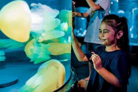 Sydney: Excursão Guiada de 1,5 Hora pelo Aquário de Sydney do SEA LIFE
