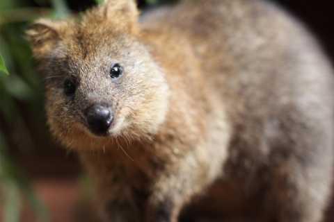 Wild Life Sydney Zoo: Australian Wildlife Guided Tour