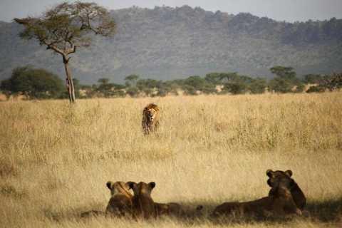 Kigali: Akagera National Park Big 5 & Big Cats Day Safari