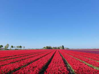 Ab Amsterdam: Tagestour nach Keukenhof, Delft & Tulpenfelder