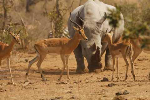 Parque Nacional Kruger: Safari privado de día completo