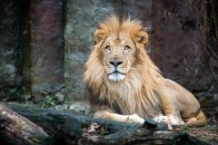 Boston: Ingresso de entrada no Franklin Park Zoo
