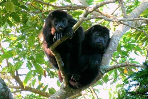 From Veracruz: Catemaco, Nature, Waterfalls & Monkeys Tour