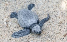 Puerto Escondido: Turtle Release Experience