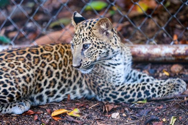San Jose: bezoek aan Costa Ricaanse Wildlife Zoo