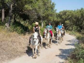 Mallorca: 2-stündiges Reiterlebnis in den Bergen