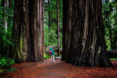 From San Francisco: Redwoods, Wine Tasting, and Cave Tour