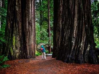 Von San Francisco: Redwoods, Weinprobe und Höhlentour
