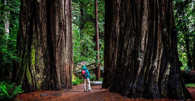 Da San Francisco: sequoie, degustazione di vini e tour delle grotte