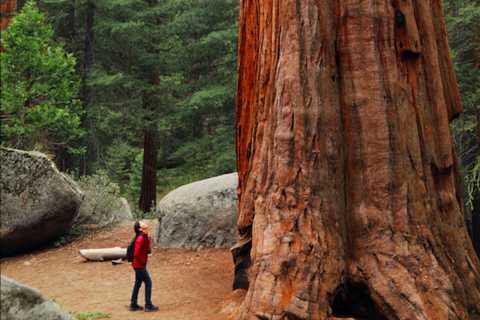 Da San Francisco: tour delle sequoie, della costa e di Sausalito