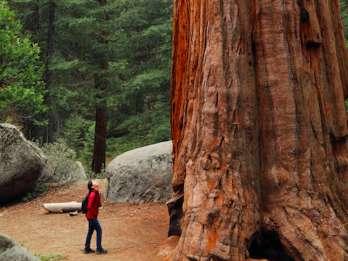 Von San Francisco: Redwoods, Coast und Sausalito Tour
