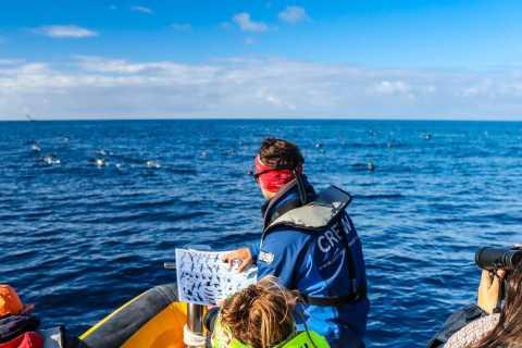Azores: Marine Birdwatching Expedition
