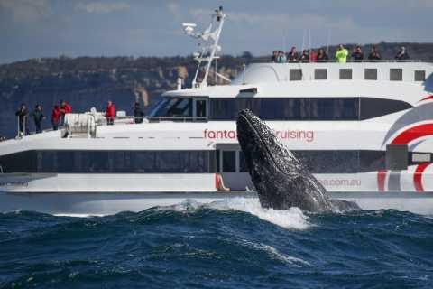 Sydney: Whale Watching Cruise by Catamaran