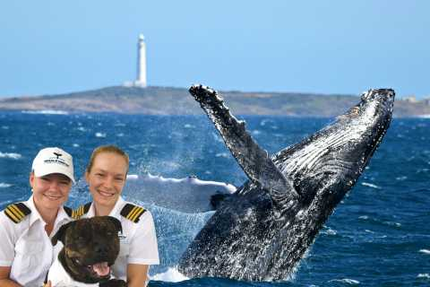 2-Hour Luxury Whale Watching Cruise from Augusta