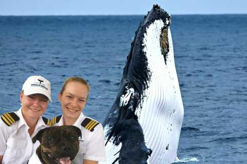 Whale Watching VIP Captain's Lounge Experience from Augusta