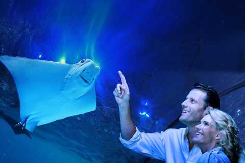 Cairns: Guided Twilight Tour of the Aquarium with Dinner