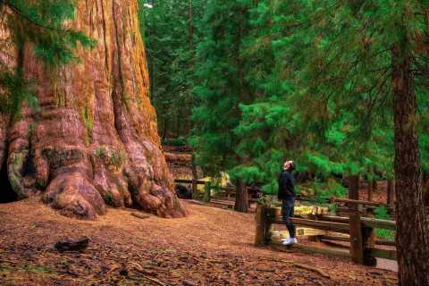 Yosemite with Giant Sequoias Small Group Tour