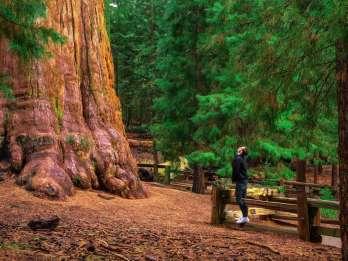 Ab San Francisco: Yosemite-Tour zu den Sequoia-Mammutbäumen