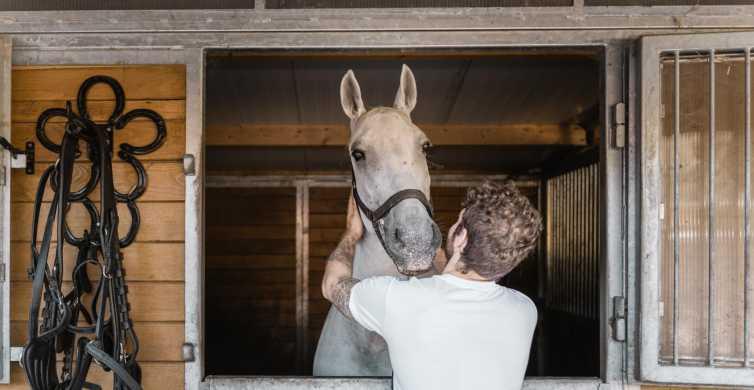 Viena: secretos del Fiaker y paseo en carruaje de caballos