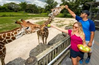 Zoo Miami: Allgemeine Eintrittskarte