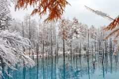 Sapporo: Tour Biei Blue Pond, Shikisai no Oka e Furano