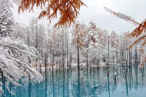 Sapporo: Biei Blue Pond, Shikisai no Oka and Furano Tour