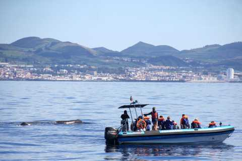 Whale and Dolphin Watching Trip from Ponta Delgada
