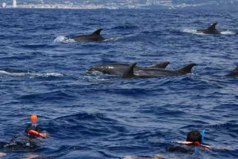Sao Miguel: Swimming with Dolphins
