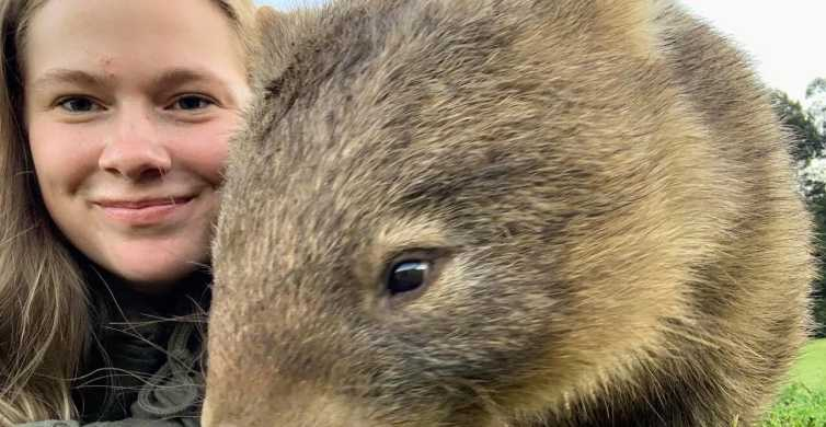 Sydney: Walking with Wombats Experience