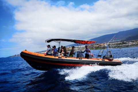 Tenerife: Dolphin and Whale Watching on a Speedboat