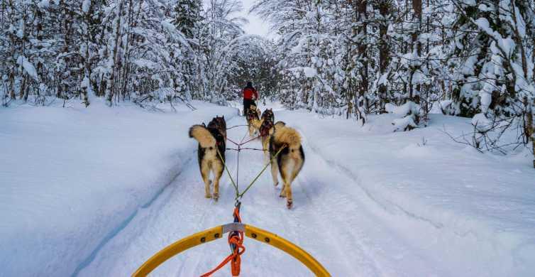 Rovaniemi: 1-Hour Self-Drive Husky Sledding Experience
