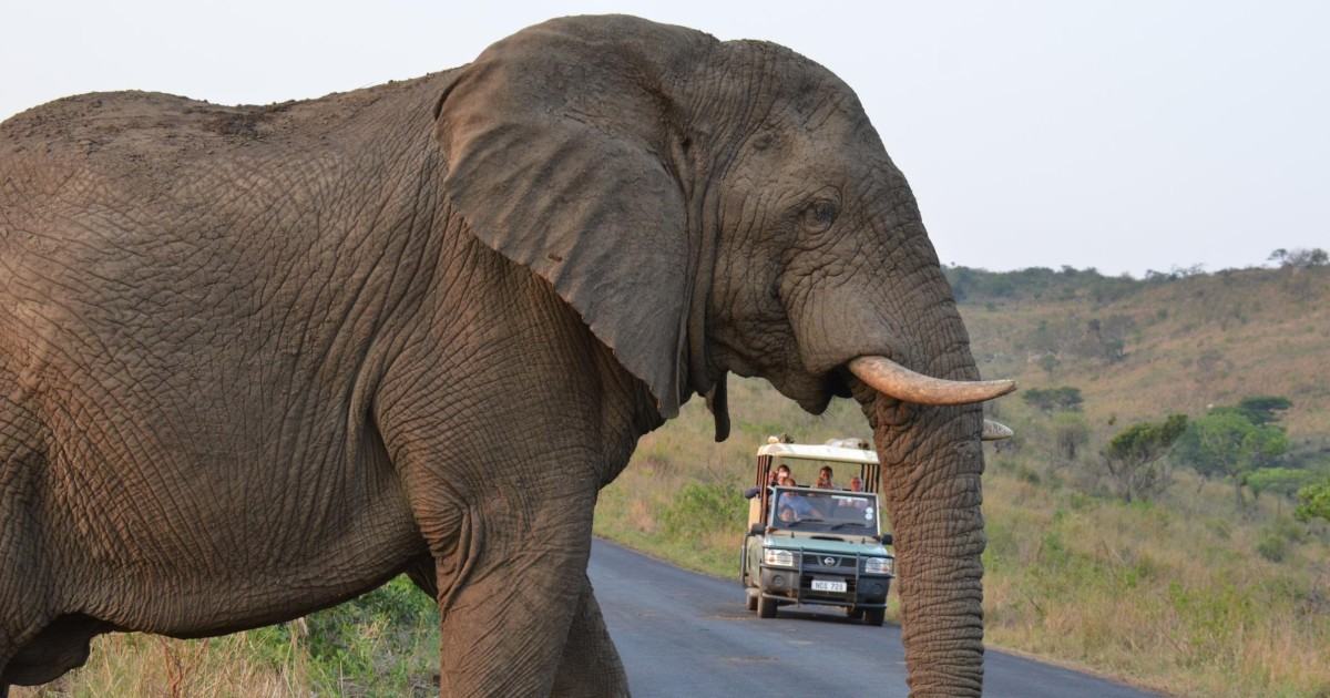 Hluhluwe Imfolozi Game Reserve from Durban