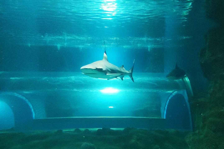 Lanzarote: Aquarium-Eintrittskarte