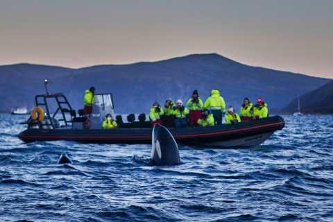 Skjervoy: RIB-boottocht om walvissen te spotten