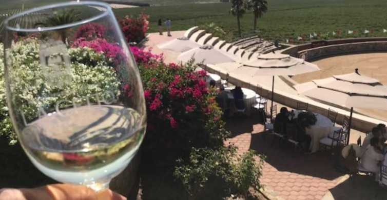 From Tijuana: Valle de Guadalupe Private Winery Tour