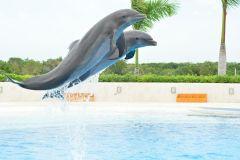 De Punta Cana: Ingresso para o Dolphin Explorer
