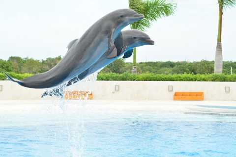From Punta Cana: Dolphin Explorer Park Admission