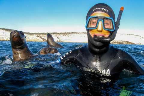 Puerto Madryn: Tauchen und Schnorcheln mit Seelöwen