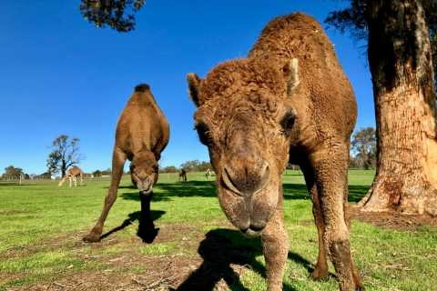 From Perth: Toodyay Sights Tour with Dinner and Stargazing
