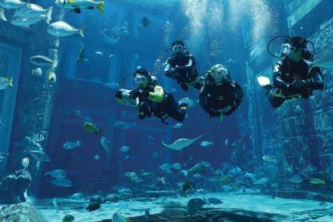 Dubai: The Lost Chambers Aquarium Atlantis Diving Experience