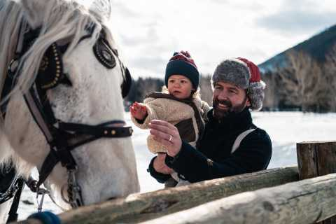 Banff: Private Horse-Drawn Sleigh Ride for Four