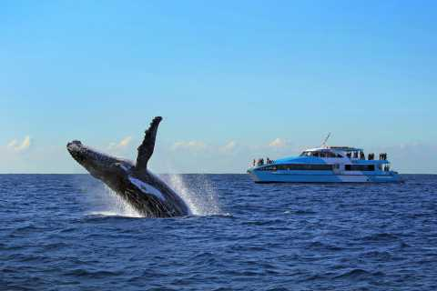 Sydney: Whale Watching Cruise