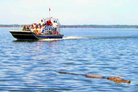 Everglades: Airboat and Alligator Show with AM or PM Pickup