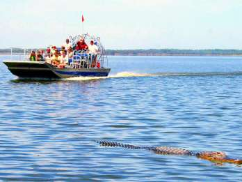 Everglades: Sumpfboot & Alligator-Show am Morgen oder Abend