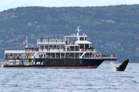 Tadoussac or Baie-Sainte-Catherine: Whale Watching Cruise