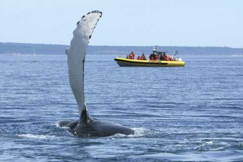 Zodiac Whale Watching 2 or 2.5-Hour Cruise